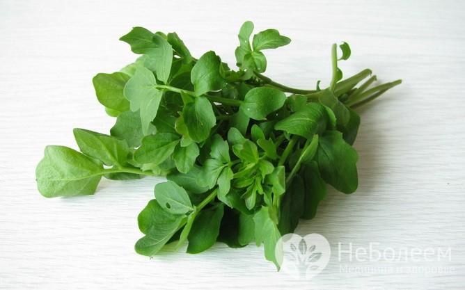 Домашние средства, помогающих при желчнокаменной болезни: настой и сок кресс-салата