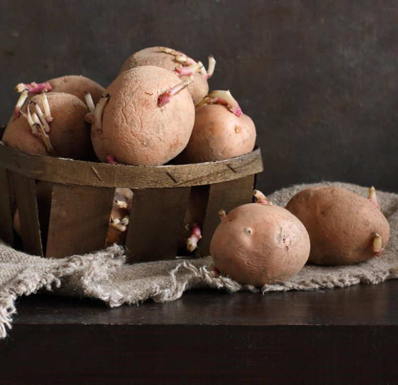 Можно ли есть проросший картофель