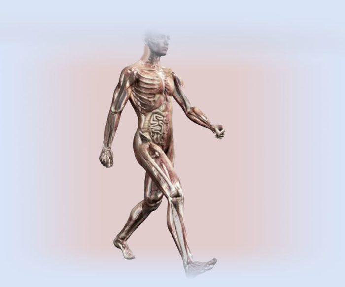 Почему ходьба самое полезное упражнение в мире