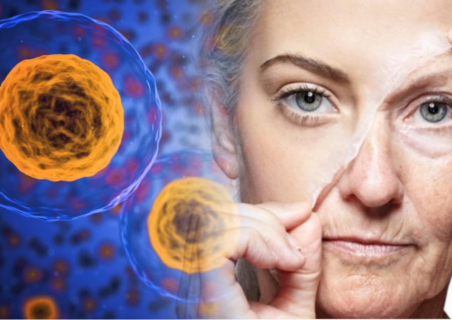 Сроки обновления клеток организма