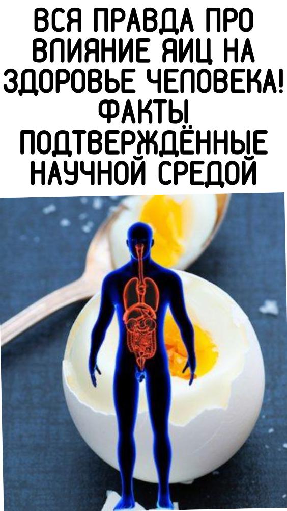 Вся правда про влияние яиц на здоровье человека! Факты подтверждённые научной средой