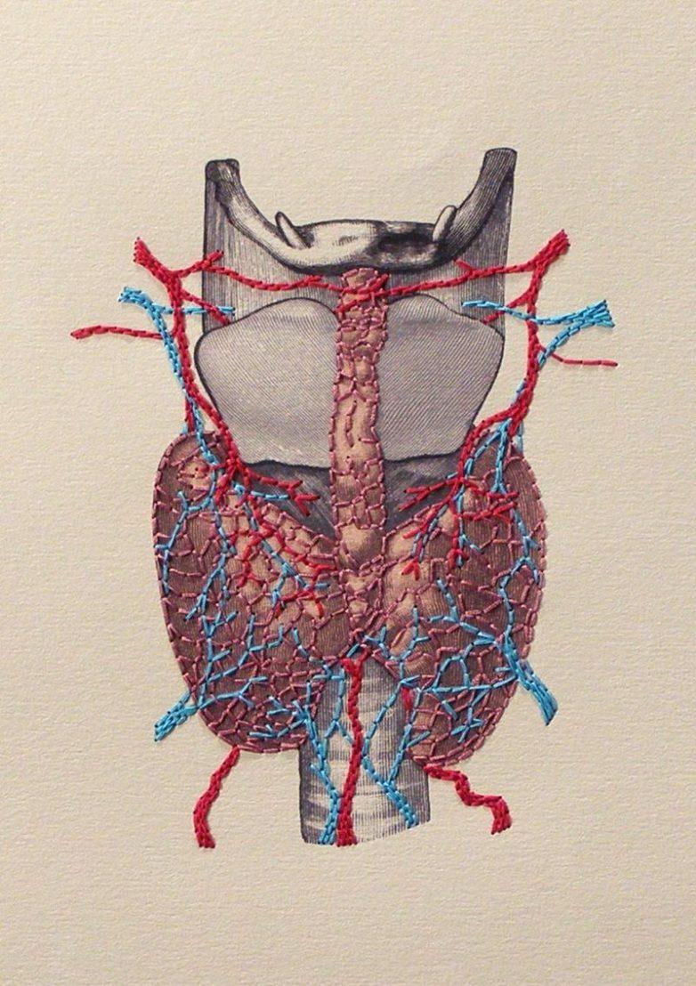 Как проверить работу щитовидной железы