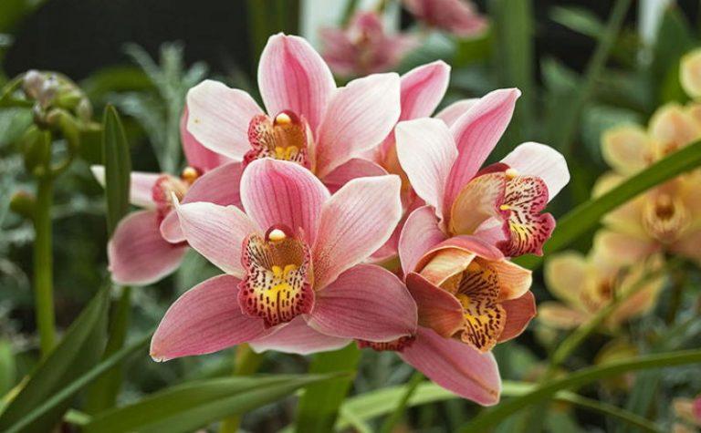 Как добиться буйного цветения орхидеи: 9 основных правил