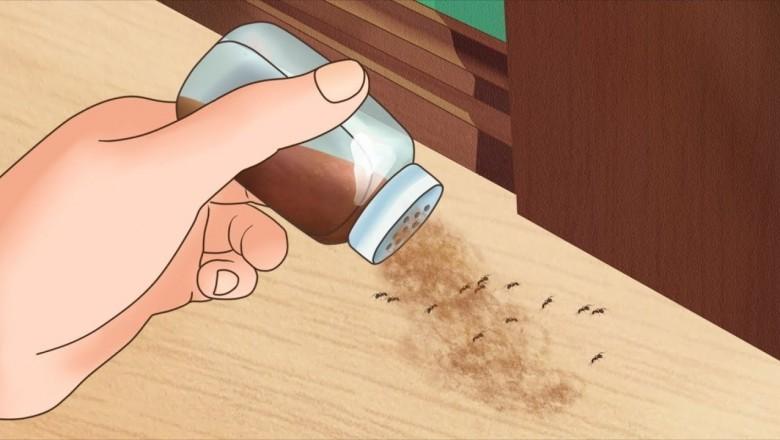 Как избавиться от муравьев в доме всего за одну ночь? Спасение от непрошеных гостей!