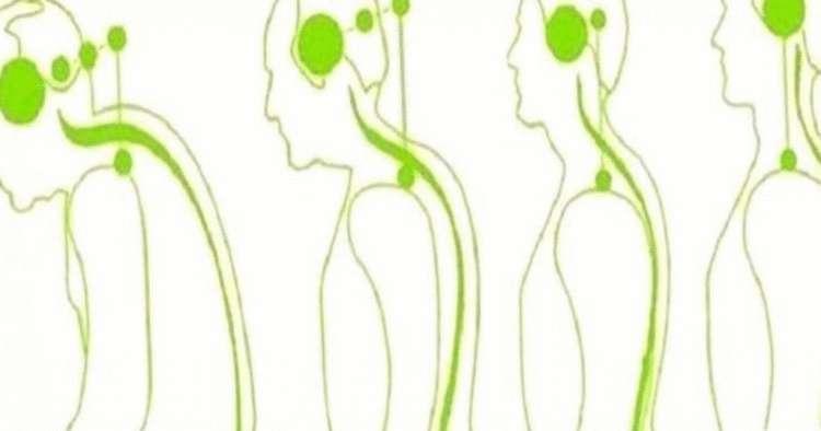 Влияние шейного остеохондроза на здоровье