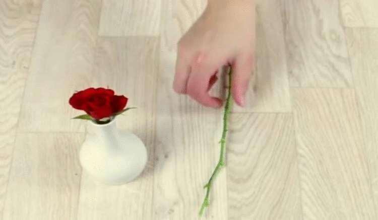 Простой способ укоренить розы с помощью картошки