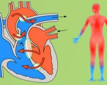 Природные сосудорасширяющие средства улучшат кровообращение и нормализуют давление!