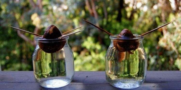 11 полезных лайфхаков с авокадо